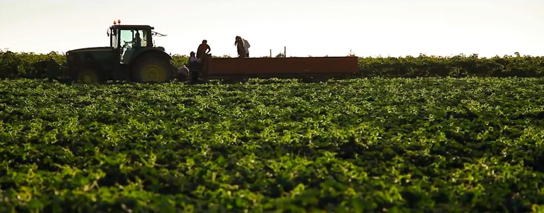 Calidad Hortalizas y Frutas Navarro de Haro
