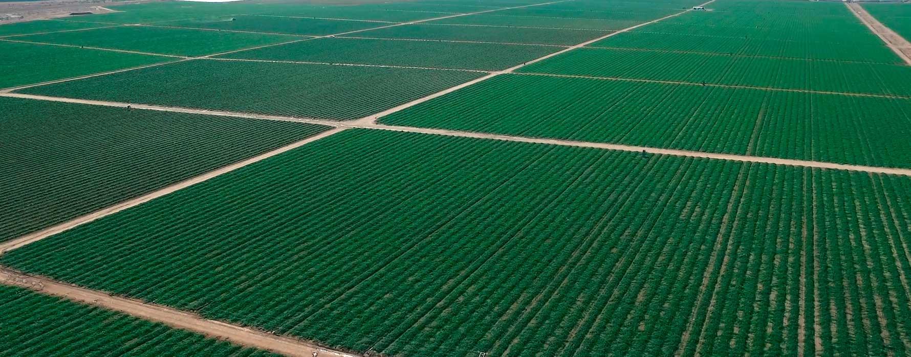 Comercialización Hortalizas y Frutas Navarro de Haro