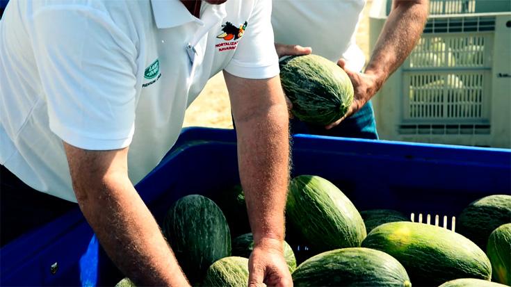 Equipo Hortalizas Y Frutas Navarro de Haro
