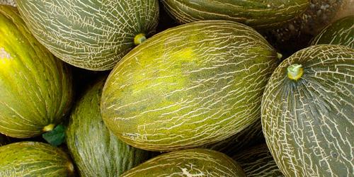 Melon Navarro de Haro