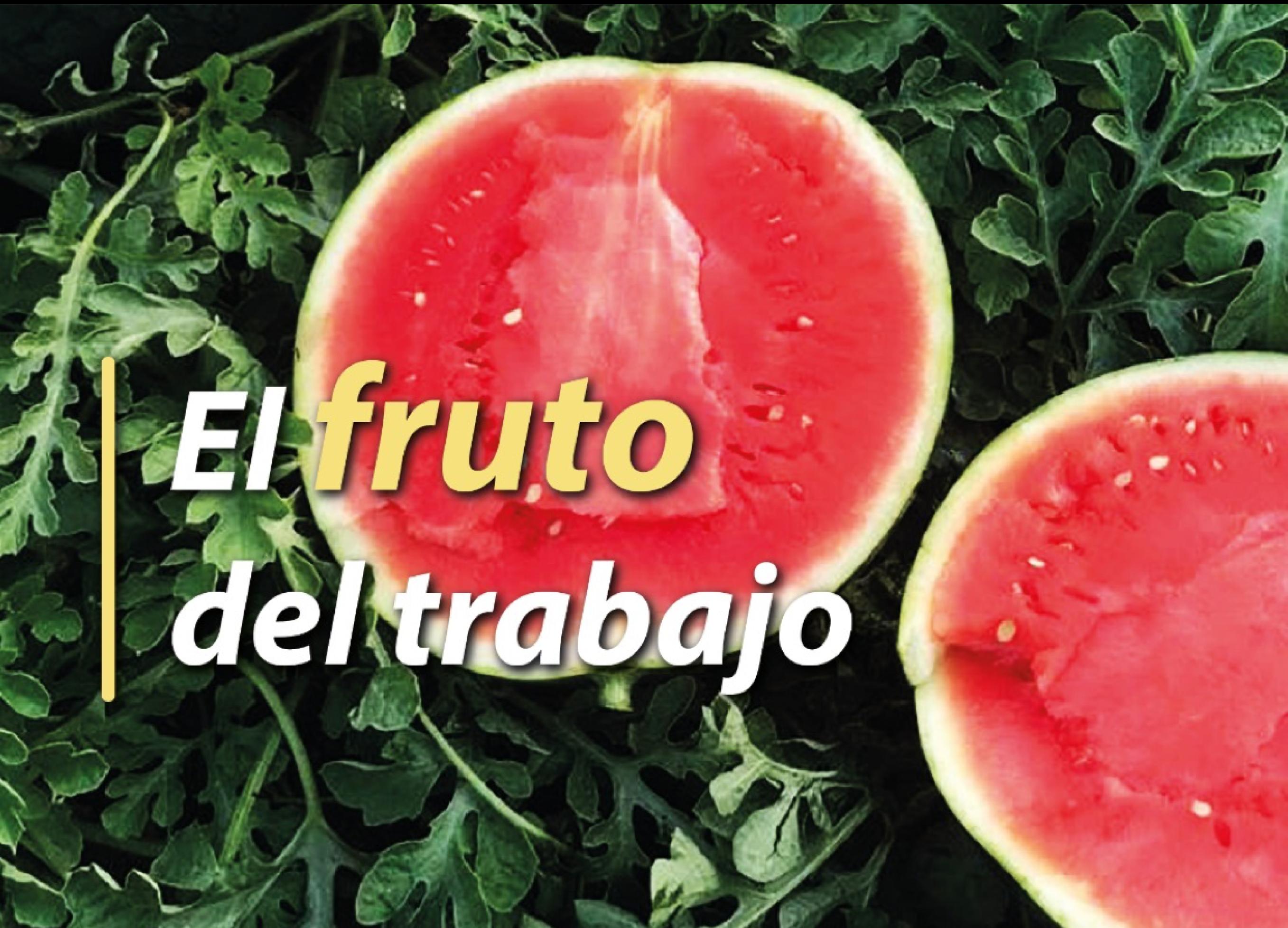 Sandia Hortalizas y Frutas Navarro de Haro